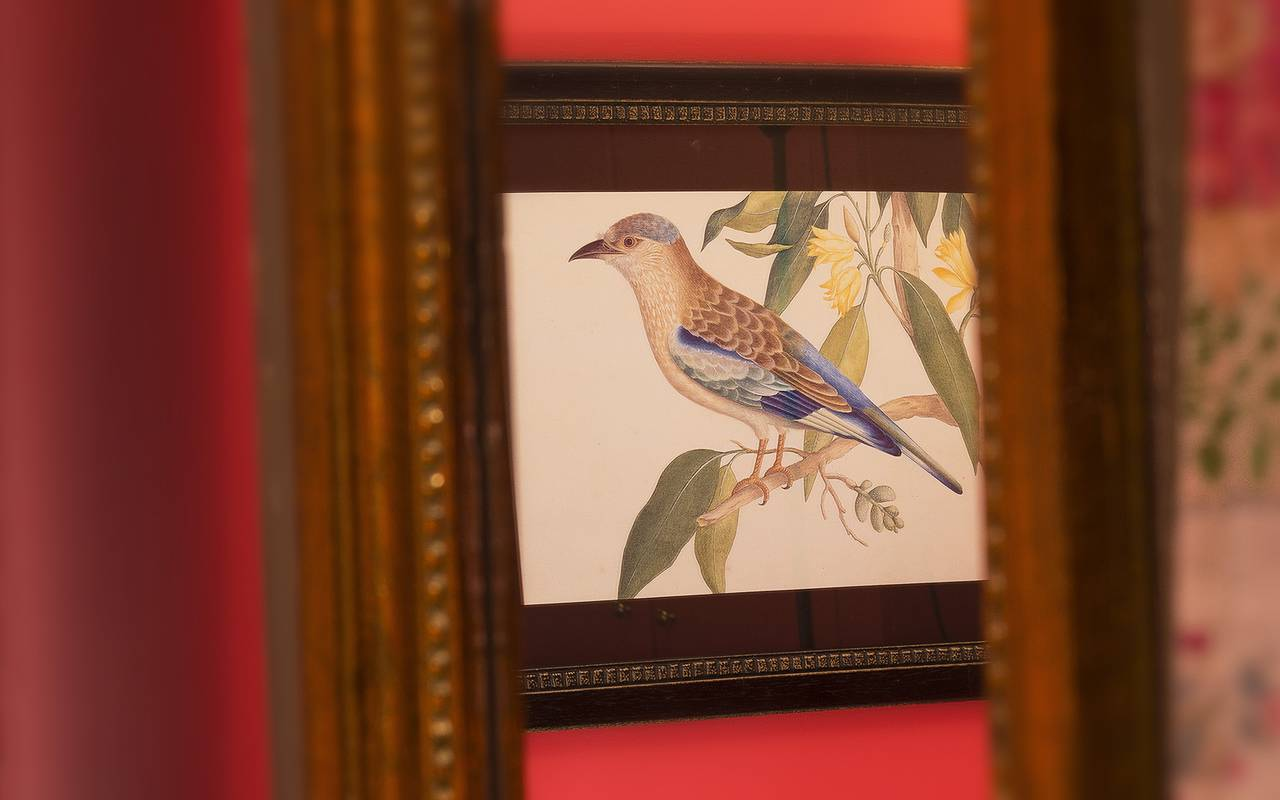 Tableau d'oiseau Boutique hôtel Paris